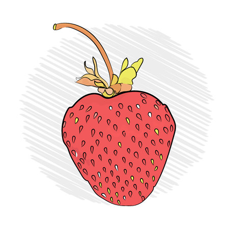 strawberry appetizing on a white background. sketch technique. Illustration