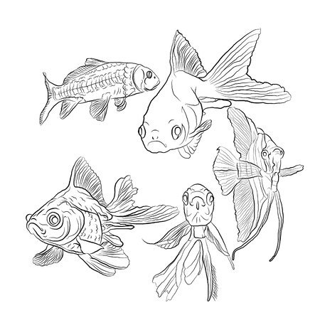 aquarium fish. sketching style. black on a white isolated background. vector illustration Standard-Bild - 125875450