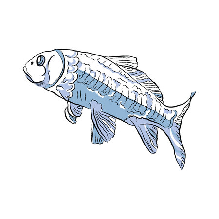 fish in the aquarium. vector illustration on white isolated background Çizim