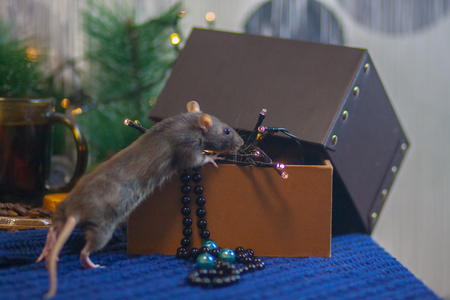 Mouse black. symbol of the new Chinese year 2020. home decorative rat. hiding in a box with a garland and a Christmas tree