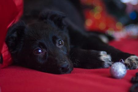 Christmas dog concept.