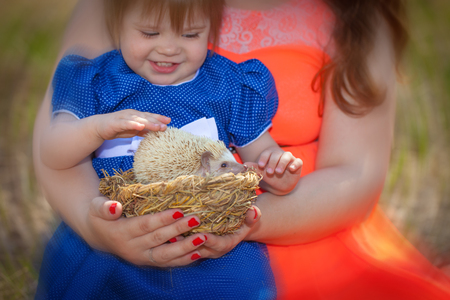 The child touches the spines of the hedgehog. Little girl playing with a pet. African dwarf rodent in a basket.