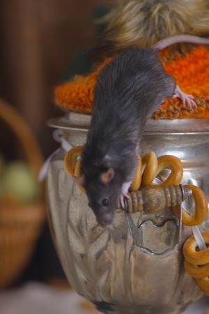 The concept of a mouse tea party. A rat crawls on a samovar. The mouse is sitting on the kettle.