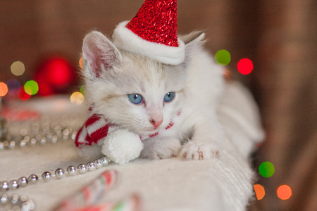 New Years animals. Kitten in a Christmas hat on the background of decorations. Cat in Santa costume. 写真素材
