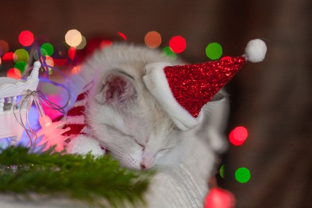 New Years animals. Kitten in a New Years suit fell asleep. The cat in Santas hat is sleeping.