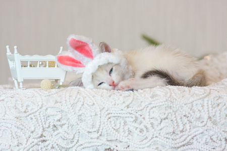 Kitten in bunny ears. Cat in a rabbit costume. The animal sleeps sweetly and comfortably.