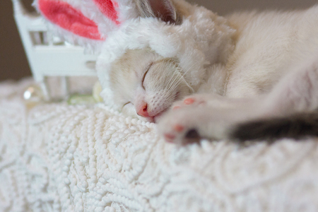 The concept of a sweet dream. Kitten in Bunny ears. The cat is sleeping. An animal in a rabbit costume.