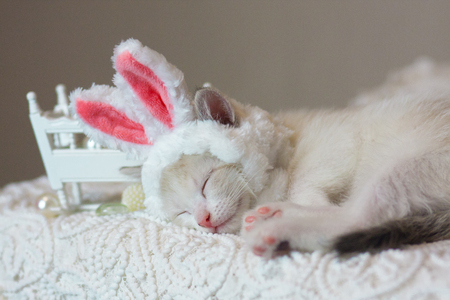 The concept of childrens sleep. Kitten sleeping. Cat in Bunny ears. An animal in a rabbit costume.