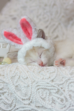 The concept of home comfort. Kitten sweet sleeping. Cat in Bunny ears. An animal in a rabbit costume.