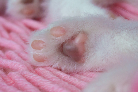 Cats foot close-up. Cat pads. Kittens leg. Animal body parts. Furry paws. 写真素材