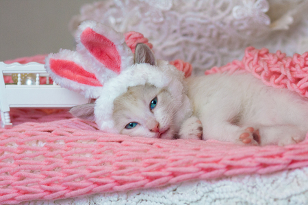 Beautiful kitten in Bunny ears. Cat in a rabbit costume. The animal is resting. 写真素材