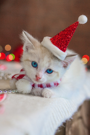 Christmas cat. Kitten in a Christmas cap. The animal is in a Santa suit. Cat close up. 写真素材