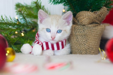 New year kitten. Cat in a scarf on the background of the tree. Cat symbol of the new year. Animal with Christmas decorations.