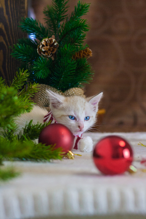 New year kitten. Cat with Christmas toys on the background of the Christmas tree. Animal in a festive atmosphere.