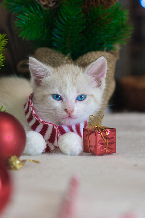 Cat symbol of the new year. Kitten with Christmas toys on the background of the Christmas tree. Festive animals.
