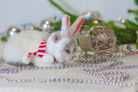 Christmas animals. The cat in rabbit ears. A kitten in a rabbit costume. Animal with Christmas decorations.