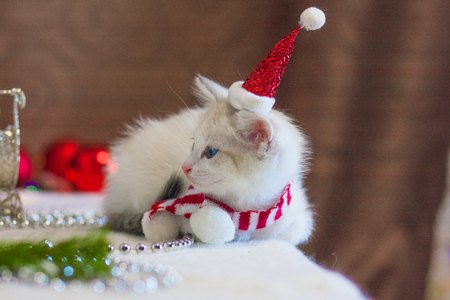 Cat in a Christmas cap. Kitten in a Santa suit. Christmas animals on the background of the Christmas tree.