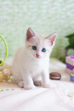 Beautiful kitten close-up. White cat on green background. The pet looks into the camera.