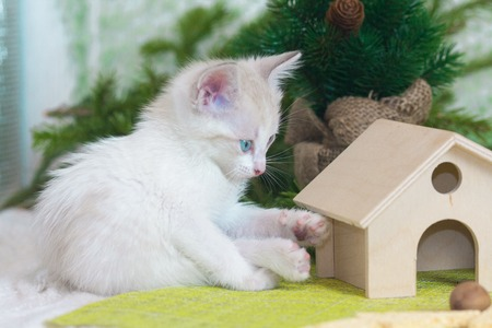 Little kitten sitting on the background of the Christmas tree. White cat sitting next to the house. Furry predator looks at the toy.