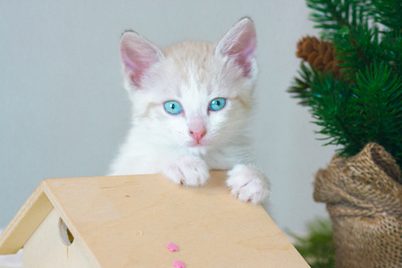 Pretty little kitty closeup. Portrait of white cat. Beautiful animal on the background of the Christmas tree.