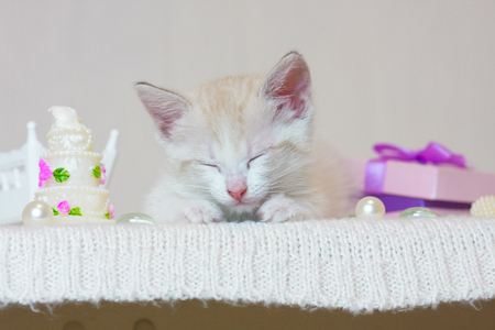 The concept of dreams. A small kitten sleeping. The cat is resting. The animal dreams. 写真素材