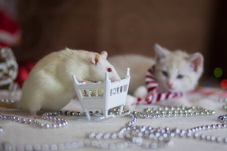 Christmas animals. A white rat with a small cot. Kitten in Christmas decorations. The cat looks at the mouse. 写真素材