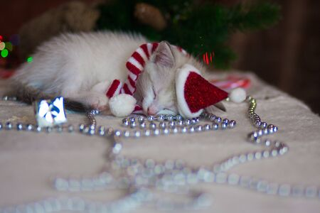 The concept of Christmas miracle. Kitten fell asleep. Cat dressed as Santa. Sleeping animal on the background of Christmas decorations.