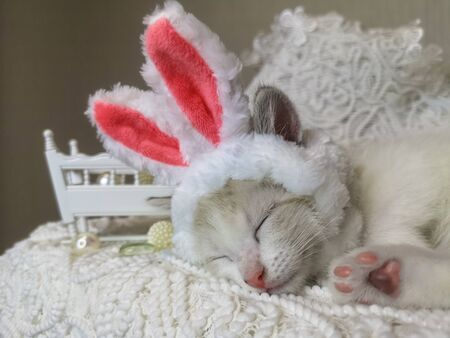 The concept of childrens sleep. The cat in rabbit ears. Cats asleep. Animal in a rabbit costume cute sleeping. Decorative Pets. Stock Photo