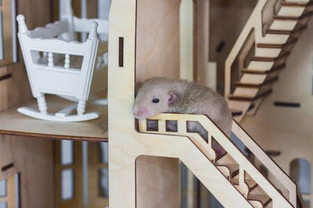 The concept of sadness. Little mouse sit on the stairs. A tiny rat stands in a wooden house. Decorative rodent closeup.