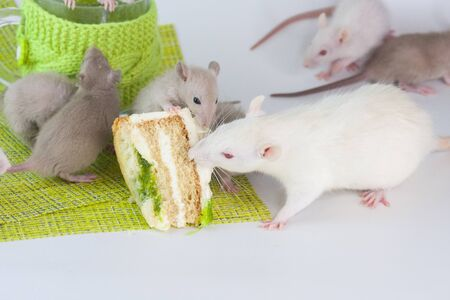 Rats eat cake. Mice on the background of glasses and sweets. Rodents drink tea.
