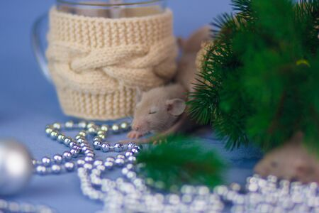 The mouse sleeps on a New Year's background. A rat lies under the Christmas tree. Decorative animals close up.