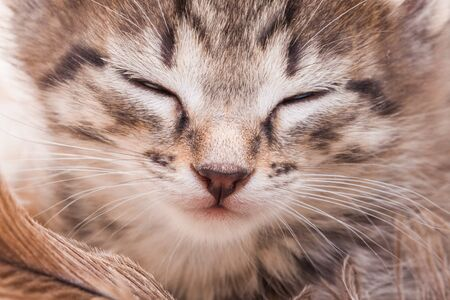 Muzzle of a cat with closed eyes close up. The kitten closed his eyes. Pets.