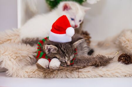 Christmas seals. A cat in a Christmas hat is sleeping. Domestic holiday pets close-up.