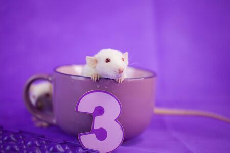 Holiday concept. The mouse sits in a large mug. Rat with candles for the cake in the form of the number 3.
