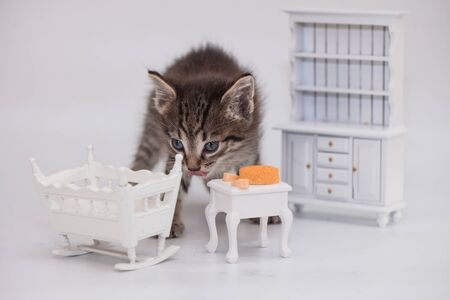 Kitten on the background of toy decorative furniture. Pets close up. Cat with toys. Фото со стока