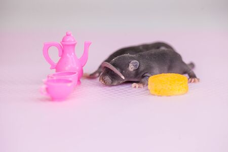 The concept is miniature. Little newborn mouse lies on the background of childrens dishes. Decorative rodents closeup. Фото со стока