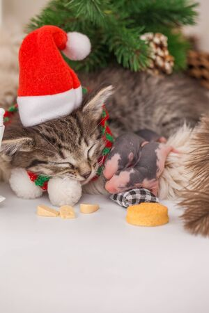 Festive pets. The cat sleeps under the tree with the mouse. Kitten in a Christmas hat with a rat.