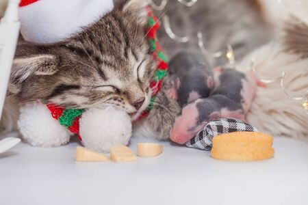 New Years animals. The cat sleeps with the rat. Festive kitten with a mouse. Imagens