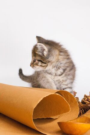 Cat on the background of kitchen paper. Kitten with decorations. Homemade cute pets close-up. Фото со стока