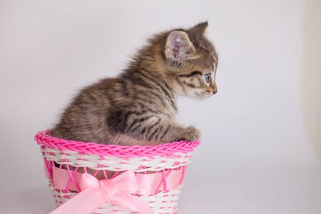 The striped kitten sits in a pink basket. Cute pets close-up.