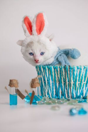 Kitten dressed as a hare. Cat in rabbit ears. The kitten sits in a blue basket. Cute pets close up.
