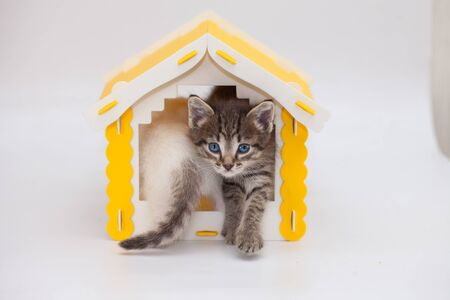 Fluffy tabby kitten sits in a yellow toy house. Pets. Muzzle cat close-up.