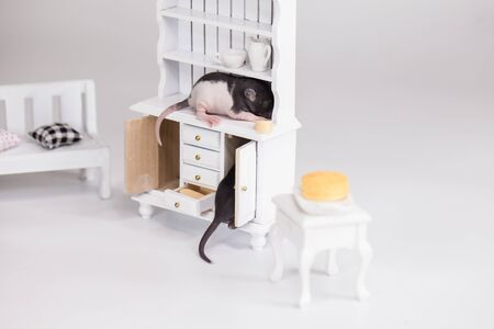 Small mice on the background of toy furniture. Newborn rats closeup. Home decorative pets. Фото со стока
