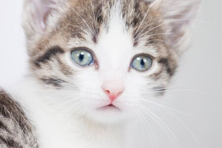 The face of a beautiful kitten close-up. Pets. The cat is looking at the camera.