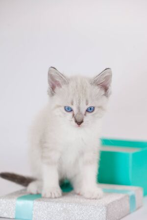 Funny pets. White beautiful kitten close-up. Cute cat in full growth. Imagens