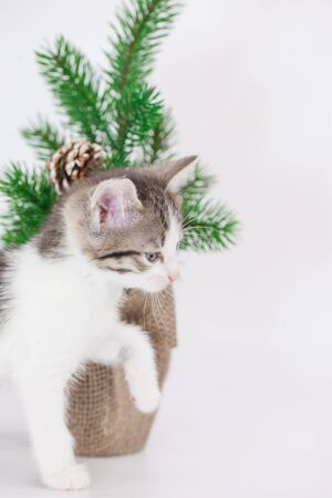 Lovely pets. Beautiful little kitten on a background of the Christmas tree. Domestic cats close up.
