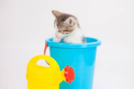 The kitten is sitting in a bucket. Funny pets. Cute cat with toys. Beasts close up.
