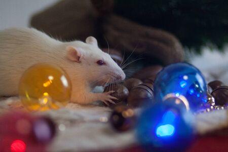 White rat among ornament decorations