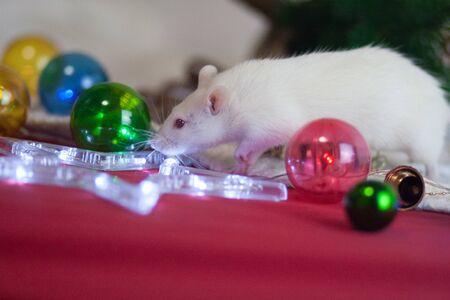 White rat among decoration ornaments