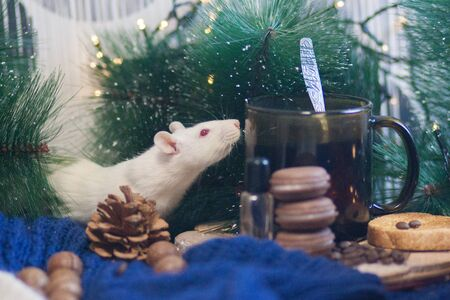 Fluffy rat drinks fragrant coffee. Rat white symbol 2020 on the table Stockfoto